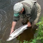 Returning an Earn salmon